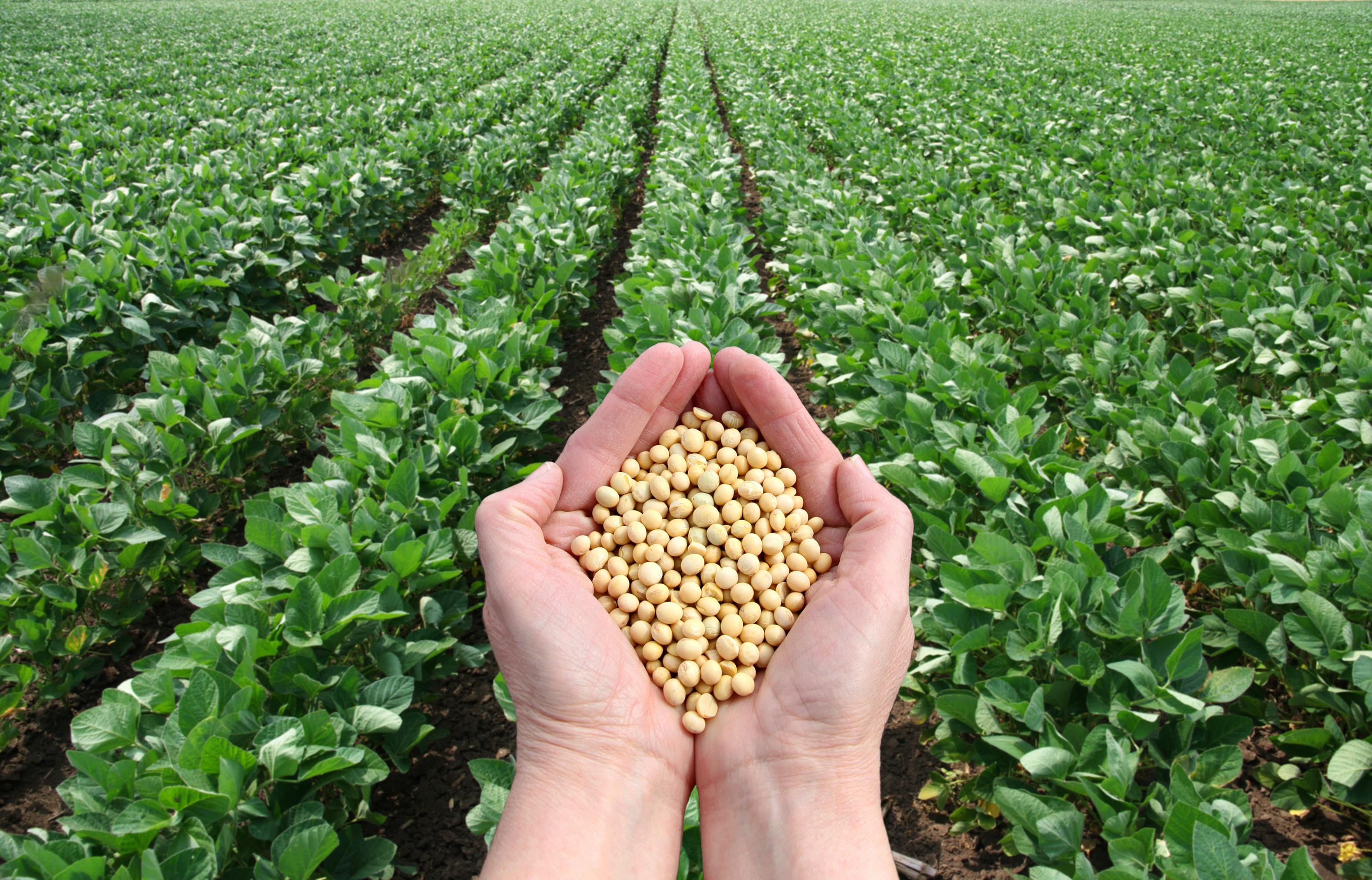 Qualidade das sementes