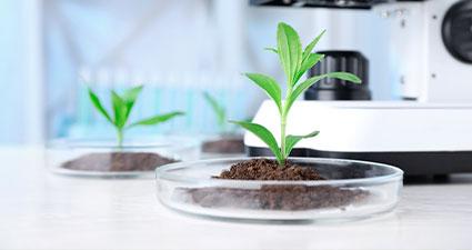 pequena amostra de solo com uma planta pequena no laboratório