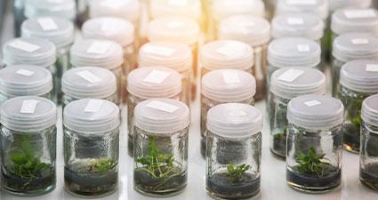 pequenos frascos com amostras de solos diferentes