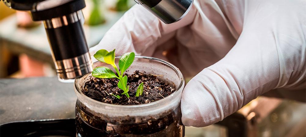 analisando amostra de solo com planta no microscópio