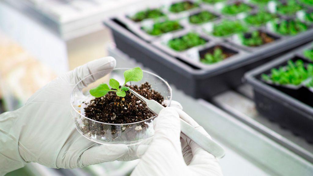 pessoa segurando uma amostra de solo e mostrando a planta com uma pinça
