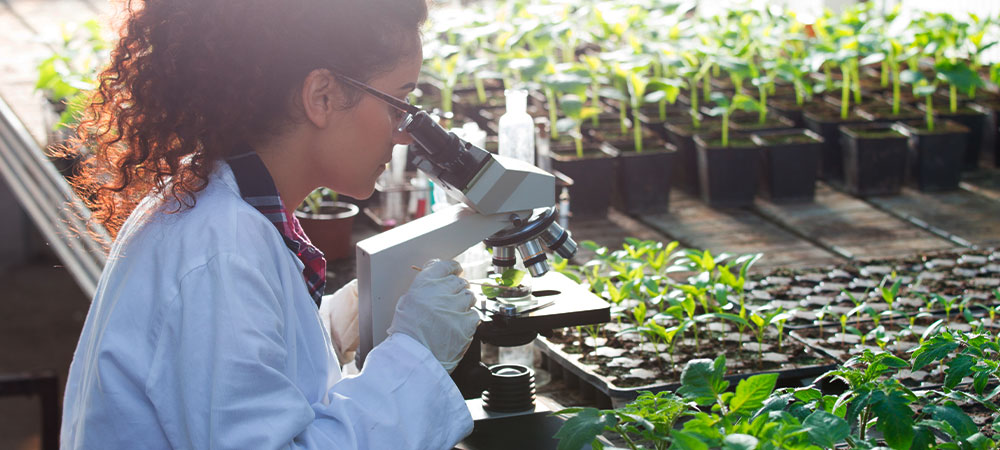 pessoa no laboratório analisando amostra de solo pelo microscópio