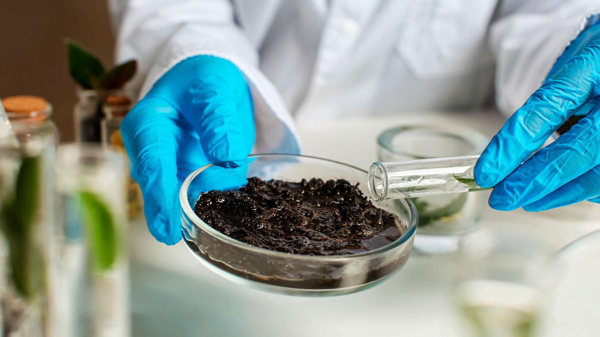 5 passos para interpretar corretamente uma análise de solo