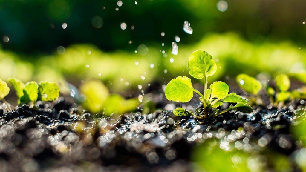 plantação recebendo irrigação