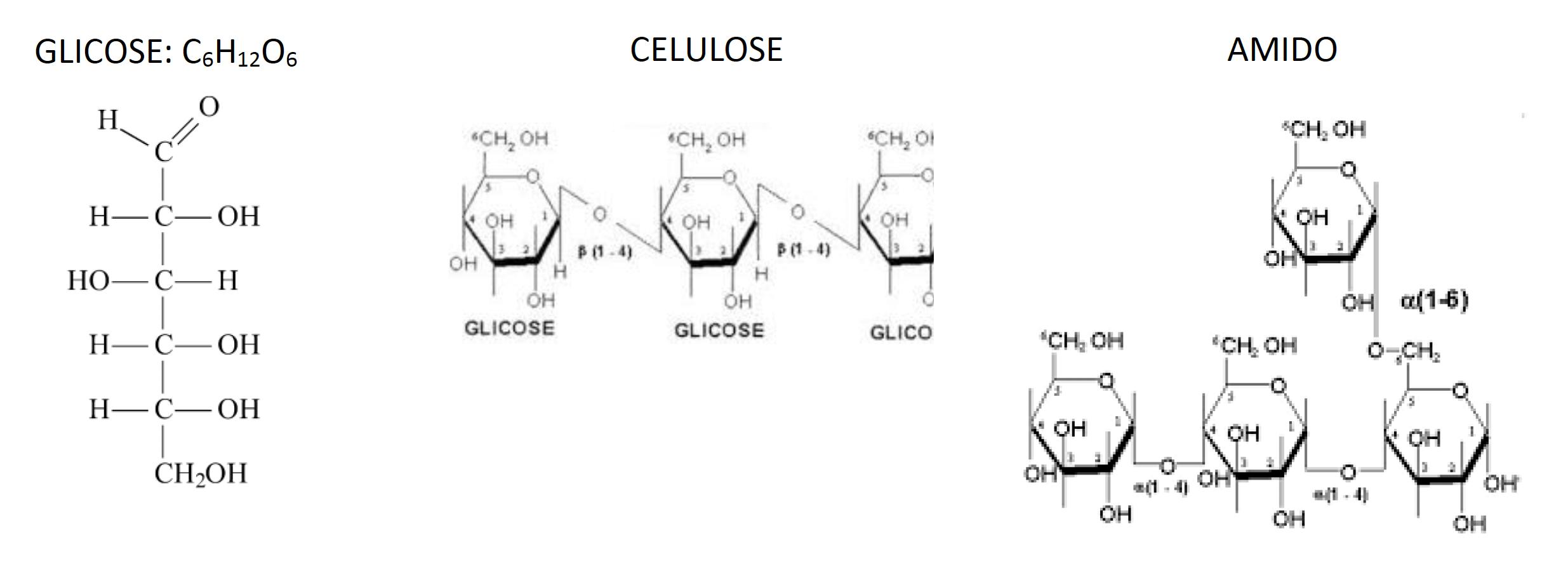 nutrientes: glicose, celulose e amido