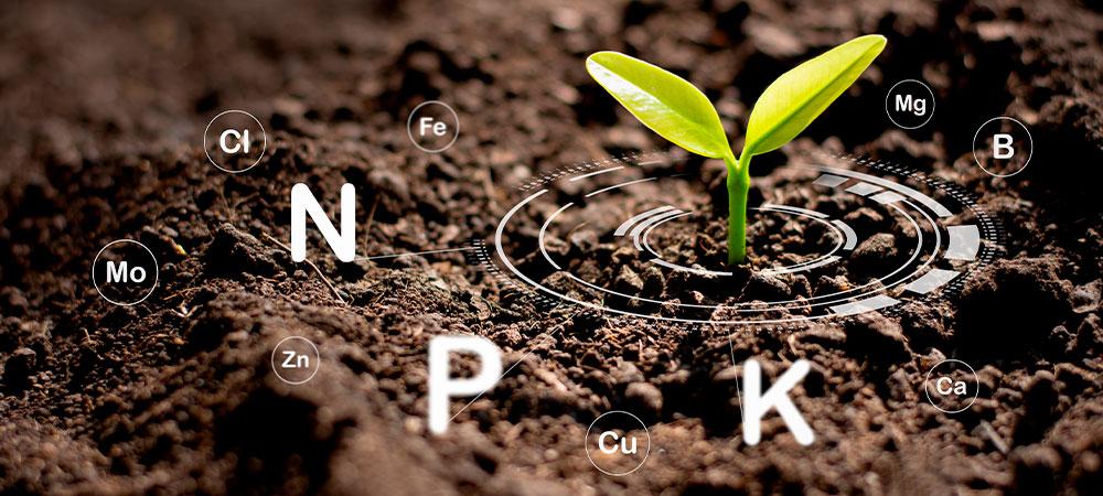 Nutrição das plantas cultivadas