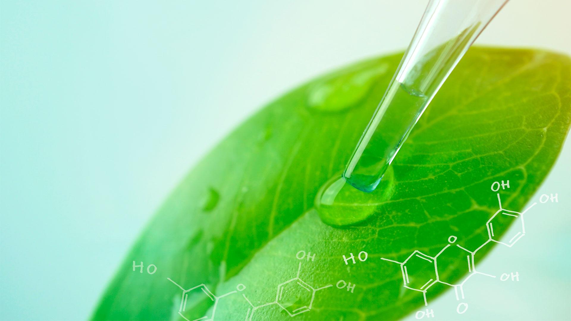 Qual a importância dos nutrientes para as plantas?