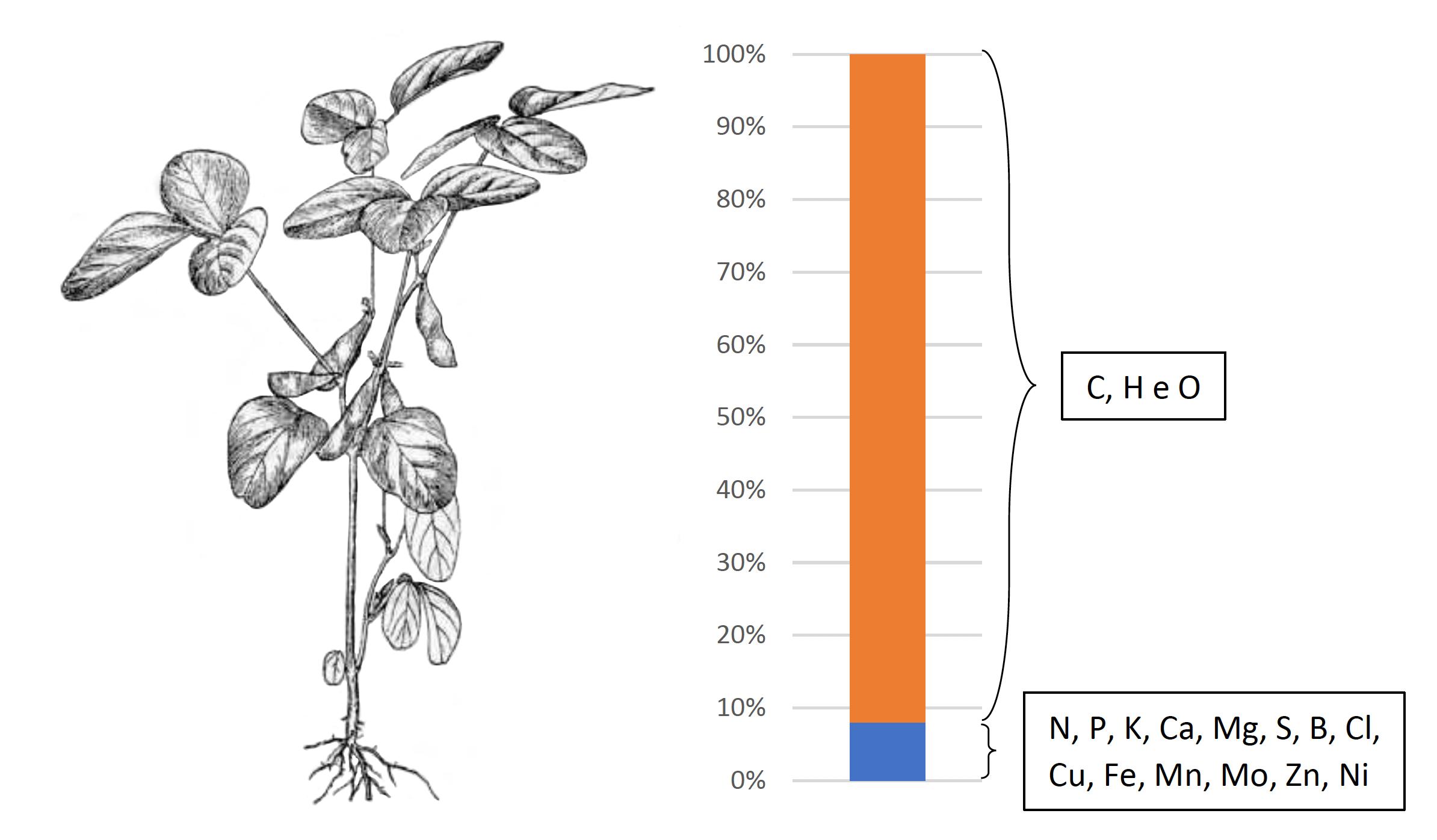 planta-nutrientes
