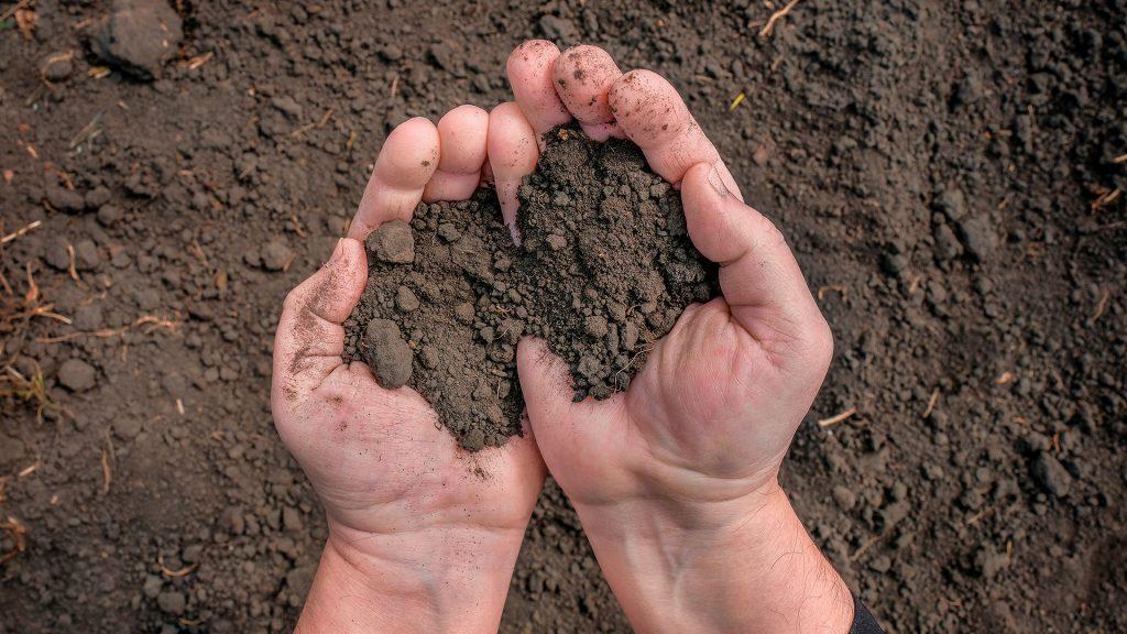 imagem de homem segurando o solo - neossolo
