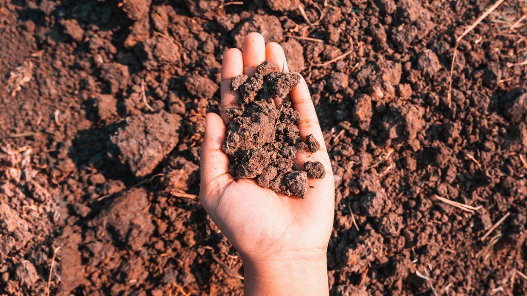 imagem mão segurando porção de solo - argissolo