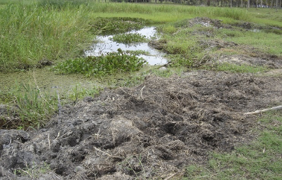 imagem de solo gleissolo - úmido