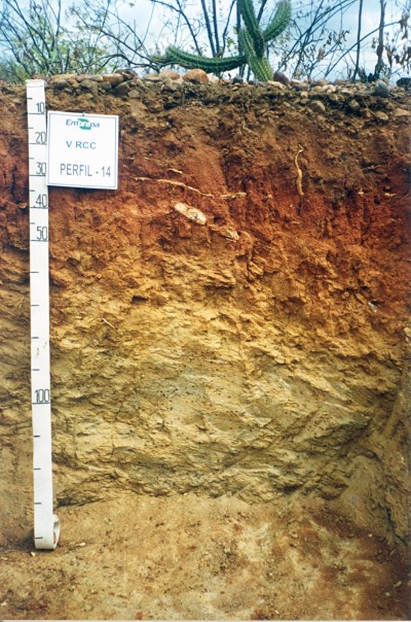 amostra de solo luvissolo crômico
