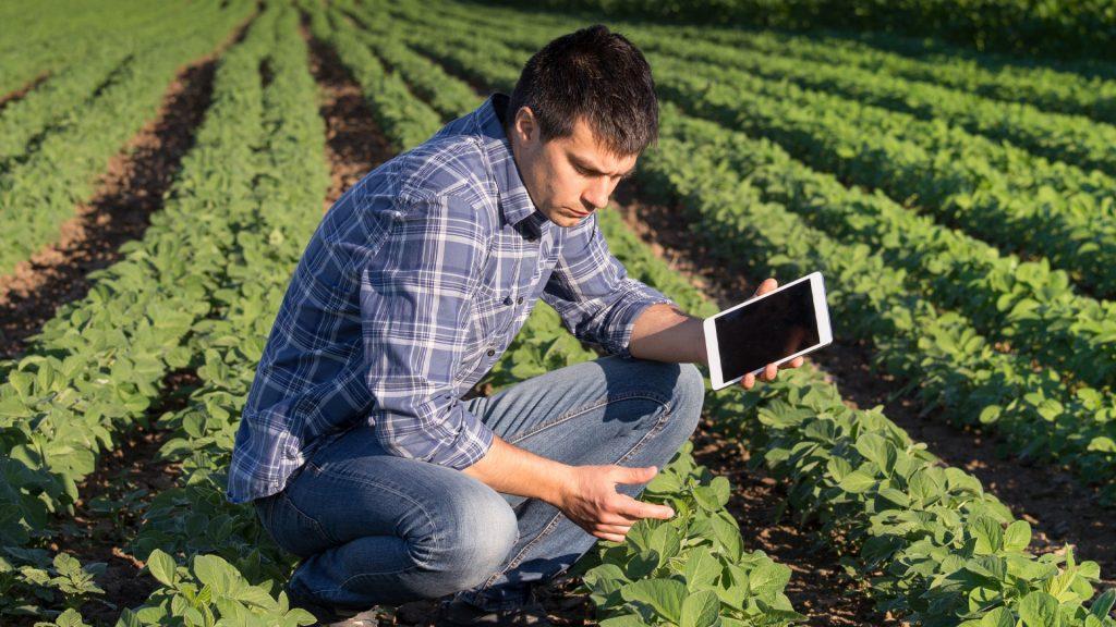 agricultor com tablet na mão analisando a plantanção