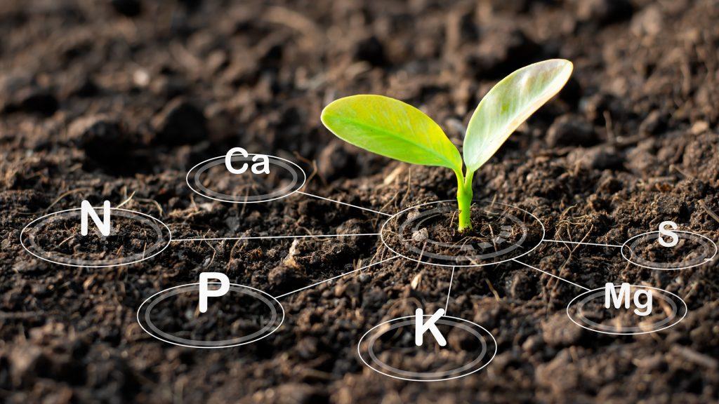 solo com nutrientes necessarios para crescer a soja