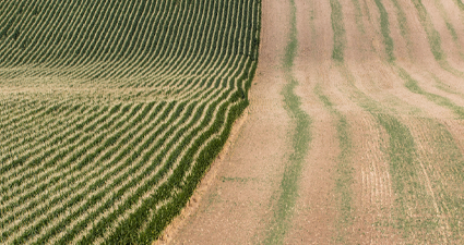 Preservando a fertilidade do solo