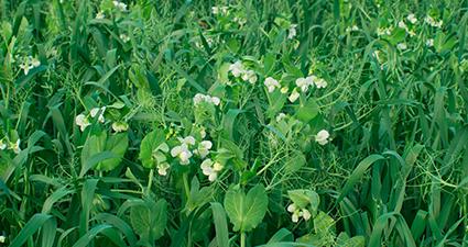 Enriquecendo os solos tropicais para altas produtividades em grandes culturas