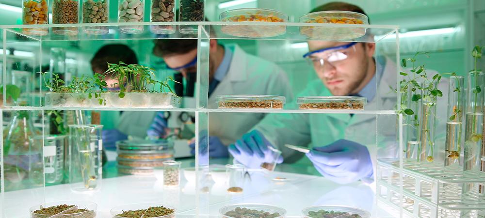 análise da qualidade das sementes em um laboratório especializado
