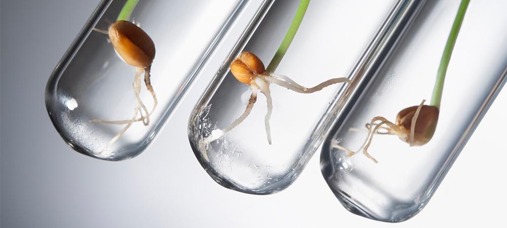 tubos de ensaios com sementes brotando dentro